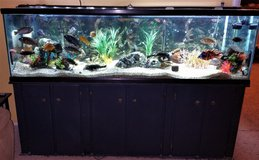 Aquarium 125 gal with cabinet stand filter gravel fish and lights in Alamogordo, New Mexico