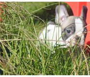 Super adorable French Bulldog puppies available and ready for new homes in Sacramento, California