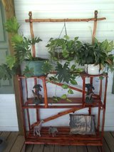 Cedar plant stand in Fort Polk, Louisiana