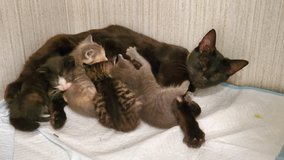 Mama Kitty and  beautiful babies are looking for forever homes.ASAP in Camp Lejeune, North Carolina