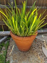 Various Healthy House Plants in Ceramic Pots in The Woodlands, Texas