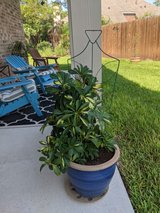 Shade loving Patio plants in The Woodlands, Texas