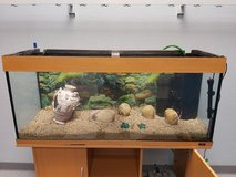 Fish Tank (250 liters) With All the Accessories in Ramstein, Germany