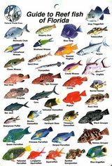 NEW Waterproof Guides to Reef Fish of Florida and Marine Invertebrates in Fort Belvoir, Virginia