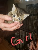 Female - 6 weeks old in Cherry Point, North Carolina