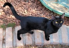 Free Cat in Fort Bliss, Texas
