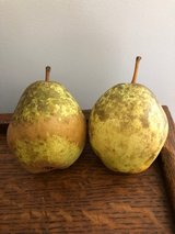 FREE PEARS in Camp Lejeune, North Carolina