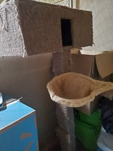 cat hide a box in Yucca Valley, California
