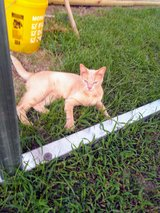 2  FREE  MALE  CATS TO GOOD HOME in Kingwood, Texas