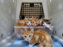 Free Kittens in Bellaire, Texas