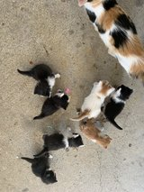 kittens in Hopkinsville, Kentucky