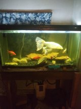 75 gallon in Chicago, Illinois