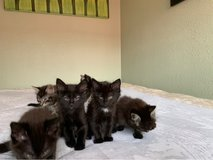 2 kittens need a home! in Travis AFB, California