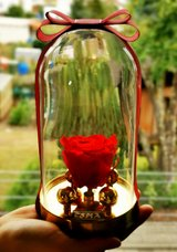 Infinity preserved rose in glass dome - rose box - gift in Ramstein, Germany