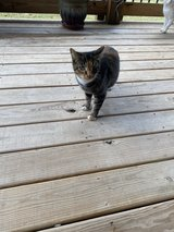 free cat 3 yrs old in Fort Campbell, Kentucky