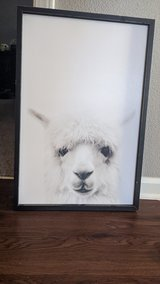 Alpaca Picture in Fort Campbell, Kentucky