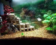 Aquarium and all supplies & 3 fish in Plainfield, Illinois