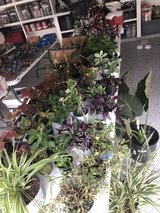 Garage Sale - Plants in Conroe, Texas