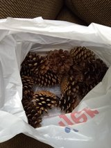 Bag of pine cones in St. Charles, Illinois