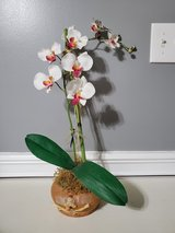 Orchid in vase in Camp Lejeune, North Carolina