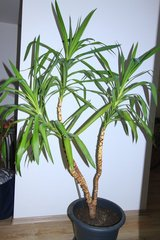 large house plant in Ramstein, Germany