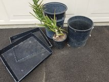Gardening supplies and a gallon size Wandering Aloe in Camp Pendleton, California