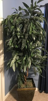 Silk Tree 6ft + with Decorative Planter in Batavia, Illinois