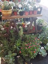 Succulents,drought tolerant plant and arrangements at lower than retail prices in Camp Pendleton, California