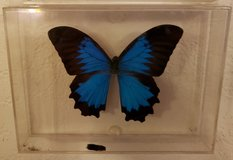 REDUCED Butterfly Mtn Blue mounted in 29 Palms, California