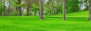Tree trimming, leaf and gutter clearing, + more! Keep your lawn looking great! in Kingwood, Texas