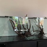 Fish Tank Forsale in Fort Drum, New York