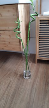 bamboo-shaped vase with two bamboo sticks in Ramstein, Germany