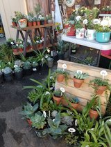 Plants/Succulents and arrangements at low prices in Camp Pendleton, California
