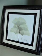 Signed Print –Ginkgo Leaves in San Antonio, Texas