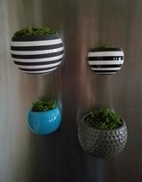 Air Plant Magnet Planters in Fort Campbell, Kentucky