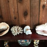 Seashells & coral in Bartlett, Illinois
