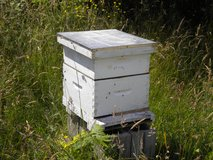 Wanted: Bees in Fort Leonard Wood, Missouri