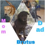 here's Brutus he needs own home in bookoo, US
