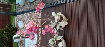Artificial orchid with top in Ramstein, Germany