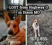 MISSING RED HEELER - REWARD in Fort Leonard Wood, Missouri