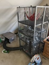 2 Ferrets and cage in Fort Leonard Wood, Missouri