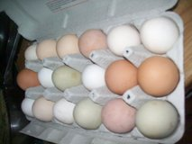 Eggs collersterrin poor-mix sz. in Ramstein, Germany
