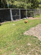 Chicken pen / chickens in Moody AFB, Georgia