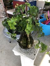 Live Ivy Plant in Glass Pitcher in Warner Robins, Georgia