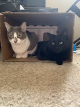 Free to a good home (must adopt both) in Camp Pendleton, California