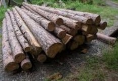 looking for logs or trees in Fort Polk, Louisiana