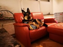 Two person small couch / love seat in Ramstein, Germany
