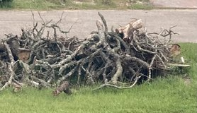 Fired wood ?? in Baytown, Texas