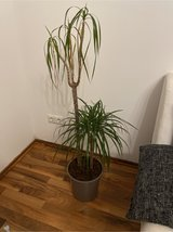 indoor plant in Spangdahlem, Germany