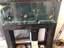 Two 1 Year old Pink Belly Side Neck Turtles/55 Gal Tank/Fluval 407 Canister Filter in Camp Pendleton, California